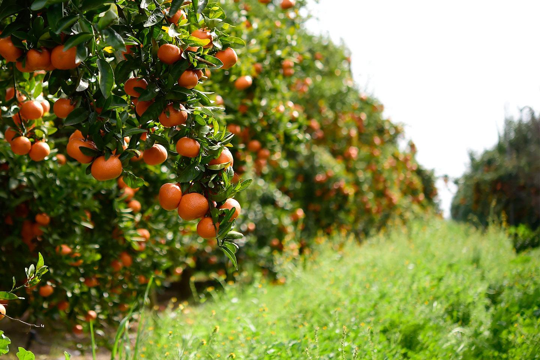 schellenberg-farms